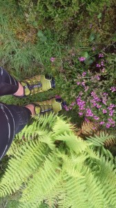 Hide and Seek: Salomon vs Nature